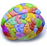 Don, creatividad, inteligencia, cognición, innovación e invención: intentando aclarar algunas dudas…